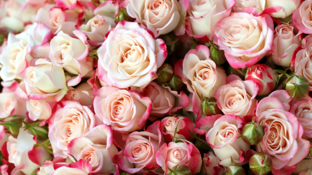 Stop and Smell the Roses.